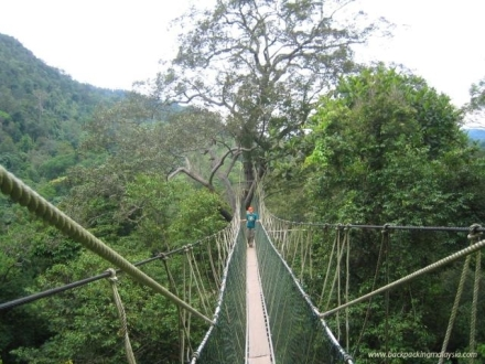 taman_negara_canopy_walk3__big
